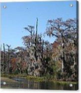 Swamp Serenity Acrylic Print