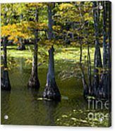 Swamp Color Acrylic Print