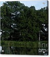 Swamp Cypress Trees Digital Oil Painting Acrylic Print
