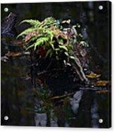 Swamp Fern Acrylic Print