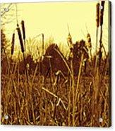 Swamp Grass Acrylic Print