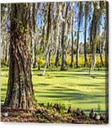 Swamp In Magnolia Plantation And Gardens Charleston Sc Acrylic Print