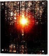 Swamp Light Acrylic Print