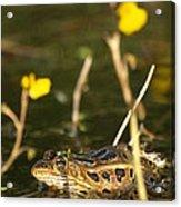 Swamp Muscian Acrylic Print