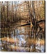 Swamp Reflections Acrylic Print