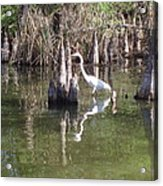 Swamp Reflections Acrylic Print