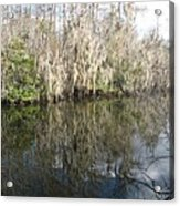 Bold Cypress Reflection Acrylic Print