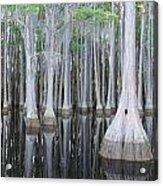 Swampy Reflections Acrylic Print