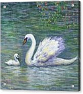 Swan And One Baby Acrylic Print