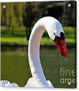 Swan Boat Acrylic Print
