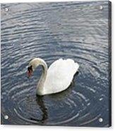 Swan Circles Acrylic Print