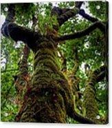 Swan Creek Tree Acrylic Print