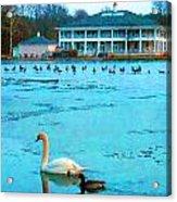 Swan Duck Geese Acrylic Print