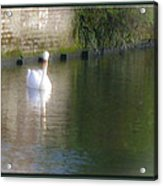 Swan In The Canal Acrylic Print