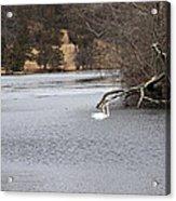 Swan Lake 1 Acrylic Print