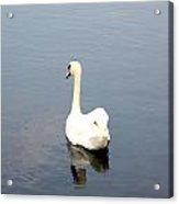 Swan Lake. Acrylic Print