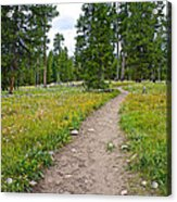 Swan Lake Trail In Grand Teton National Park-wyoming Acrylic Print