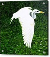Swan-oil Painting Acrylic Print by Rejeena Niaz