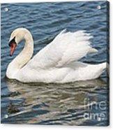 Swan On Blue Waves Acrylic Print