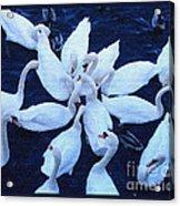 Swan Party Acrylic Print
