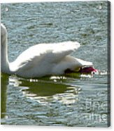 Swan Reflection Acrylic Print by Terry Weaver