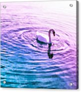 Swan Ripples Acrylic Print