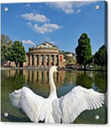 Swan Spreads Wings In Front Of State Theatre Stuttgart Germany Acrylic Print by Matthias Hauser