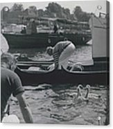 Swan Upping Picturesque Ceremony That Has Not Changed For Acrylic Print