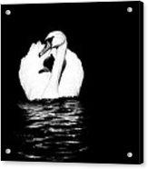 Swan White On Black Acrylic Print