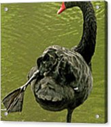 Swan Yoga Acrylic Print by Rona Black