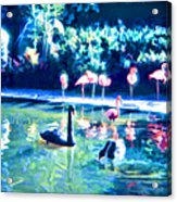 Swans And Flamingos Acrylic Print