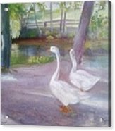 Swans At Smithville Park Acrylic Print