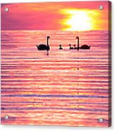 Swans On The Lake Acrylic Print by Jon Neidert