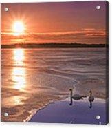 Swans Sunrise Acrylic Print