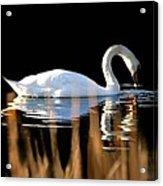 Swan River Acrylic Print