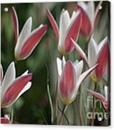 Swaying To The Music Acrylic Print