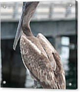 Sweet Brown Pelican - Digital Painting Acrylic Print