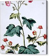 Sweet Canada Raspberry Acrylic Print