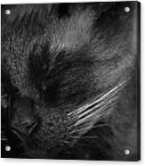 Sweet Dreams In Black And White Acrylic Print
