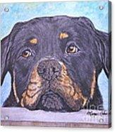 Rottweiler's Sweet Face Acrylic Print