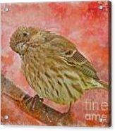 Sweet Female House Finch 3 - Digital Paint Acrylic Print