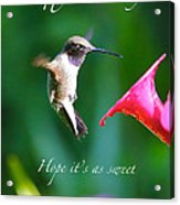 Sweet Hummingbird Birthday Card Acrylic Print