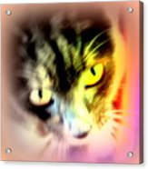 The Sweet Hunter With The Yellow Eyes  Acrylic Print