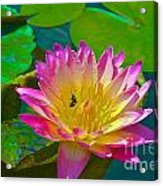 Sweet Lilly Nectar Acrylic Print
