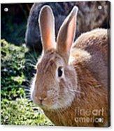 Sweet Little Bunny Acrylic Print