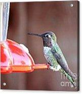 Sweet Little Hummingbird On Feeder Acrylic Print