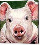 Sweet Little Piglet On Green Acrylic Print