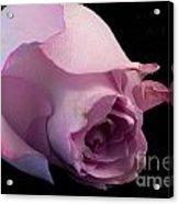 Sweet Onament -the Rose Acrylic Print
