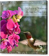 Sweet Pea Hummingbird Iv With Verse Acrylic Print by Debbie Portwood