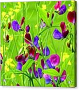 Sweet Peas Acrylic Print